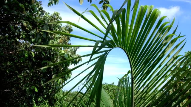 Palm Tree Leaf Tremling in Wind video