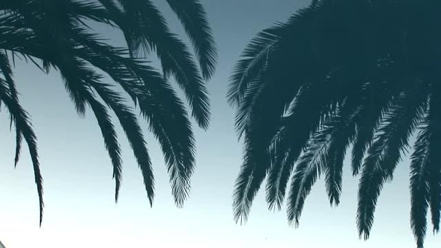 пальма зеркальные - спокойная вода стоковые видео и кадры b-roll