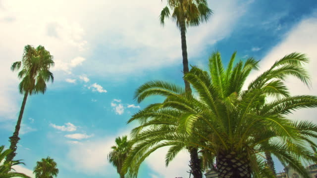 Palm tree on blue sky and white clouds. Timelapse of tropical palmtree video