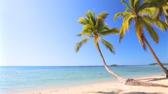 パームトリー、夏のビーチ - リゾート点の映像素材/bロール