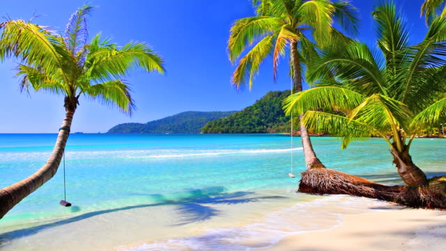 palm tree on the tropical beach - exotic stock videos & royalty-free footage