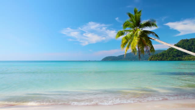 Palm tree on the tropical beach video
