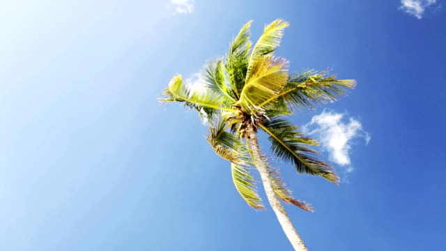 vídeos de stock e filmes b-roll de palm tree over blue sky and clouds - oscilar