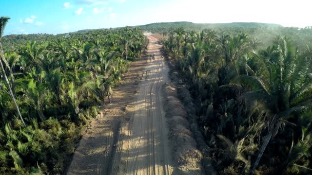 palm tree road in santo antônio dos lopes, ma, brasilien - tropischer baum stock-videos und b-roll-filmmaterial