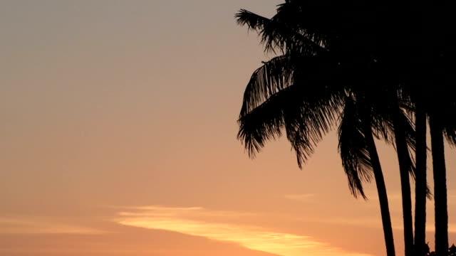 Palm Tree Silhouette Sunset video