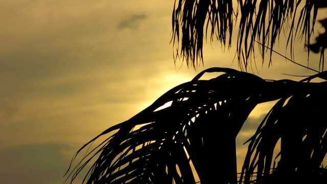 Palm Tree Silhouette Sunset video