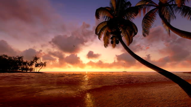 Palm tree silhouettes at sunset. Sound of surf. Realistic three dimensional animation of sunset tropical beach with coconut palm silhouettes and with sailing boat and seagulls in the distance. Audio - sound of surf. hawaii islands stock videos & royalty-free footage