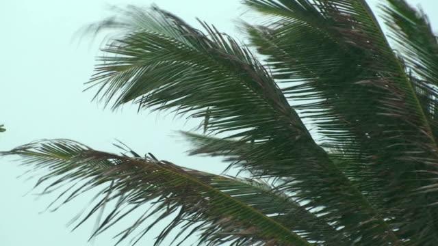 Palm Tree Storm video