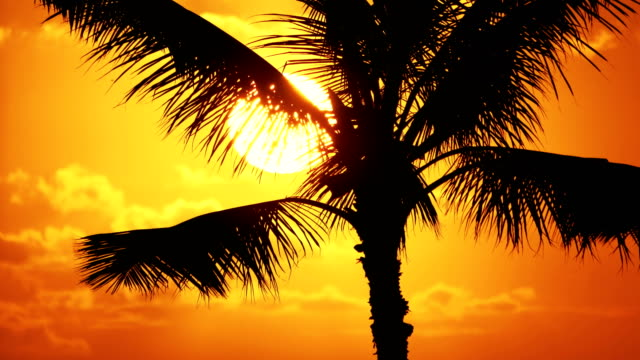4 k スローモーションでハワイの椰子の木サンセット - ハワイ点の映像素材/bロール