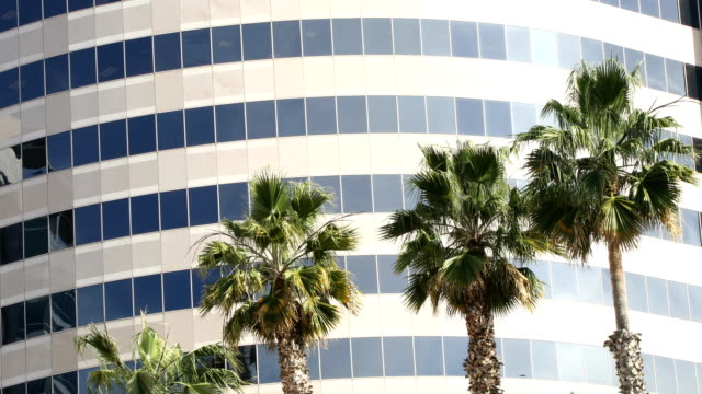 Palm tree tops swaying the wind in front of office building 4k video static version Palm tree tops swaying the wind in front of office building 4k video static version office park stock videos & royalty-free footage