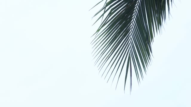 Palm tree tops Natural background summer background stock videos & royalty-free footage