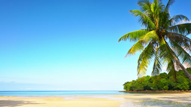 Palm Tree. Tropical Beach. Luxury travel Nature Background coconut palm tree stock videos & royalty-free footage