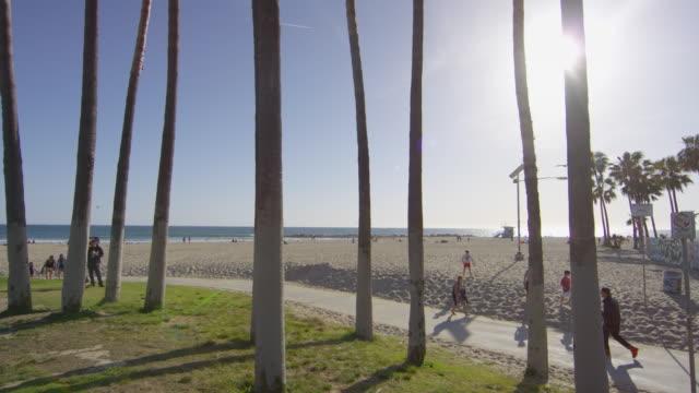 Palm tree trunks near the beach