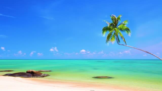 Palm tree under sea water video