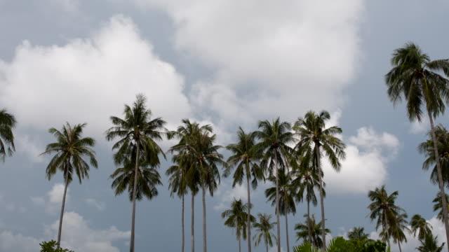 Palm tree Palm tree daylight savings stock videos & royalty-free footage