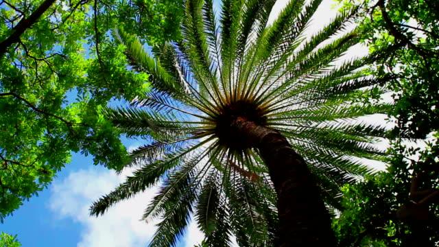 palm tree - gärtnerisch gestaltet stock-videos und b-roll-filmmaterial