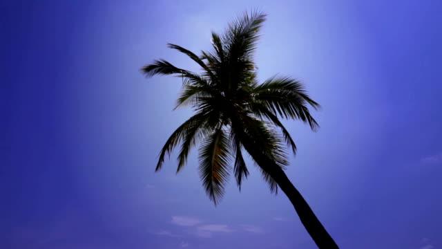 palma tree - cespuglio tropicale video stock e b–roll
