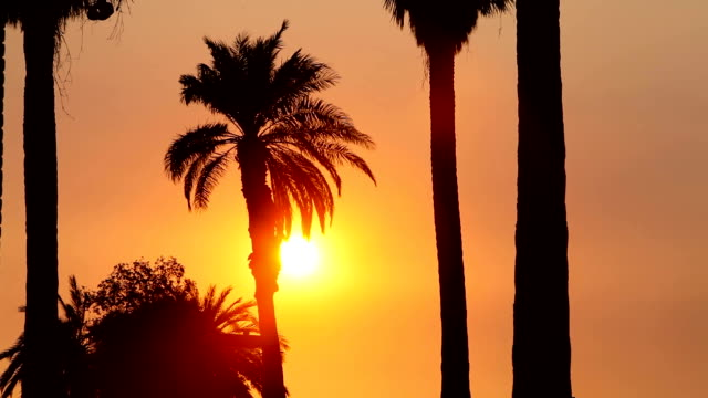 Palm Tree Waves as the Sun is Setting video
