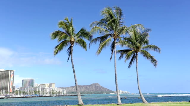 HD Palm tree with Diamond head mountain background video