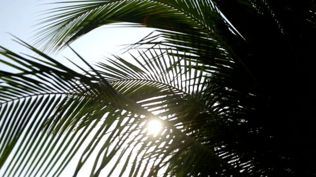 palm tree with green leaf and sun ray on tropical maldives island, exotic place - pianta sempreverde video stock e b–roll