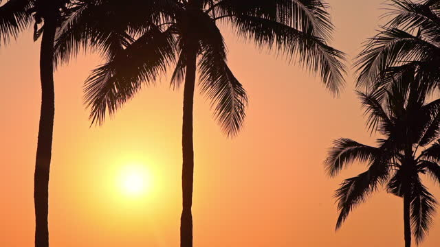 Palm tree with sky at sunset or sunrise time