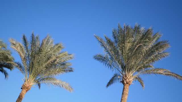 Palm trees against blue sky. Palm trees at beach. View of nice tropical background. Tops of palm trees against the background of the sunny sky. 4k video in ProRes