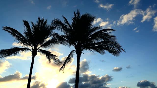 Dłoń drzewa przeciw błękitne niebo – film