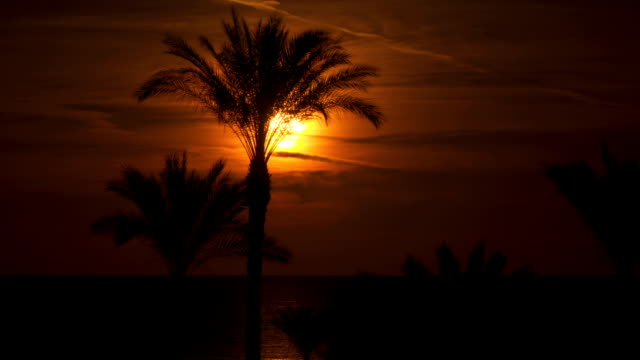 Palm trees against the background of the sun at dawn Palm trees against the background of the sun at dawn. Palm trees are near the sea. The sun is reflected in the water desert oasis stock videos & royalty-free footage