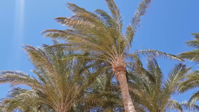 palm trees against the blue sky. video