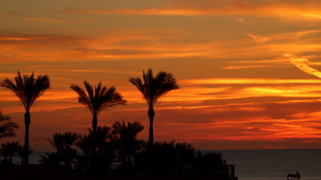 Palm trees against the sky at sunrise Palm trees against the sky at sunrise human back stock videos & royalty-free footage