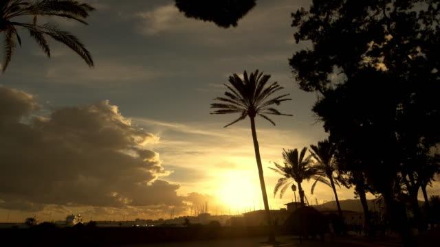 vídeos de stock, filmes e b-roll de ws de palmeiras ao longo da promenade em maiorca - marina