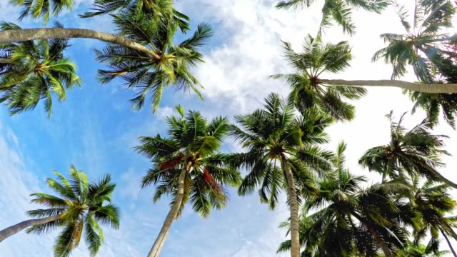 Palm trees and blue skies video