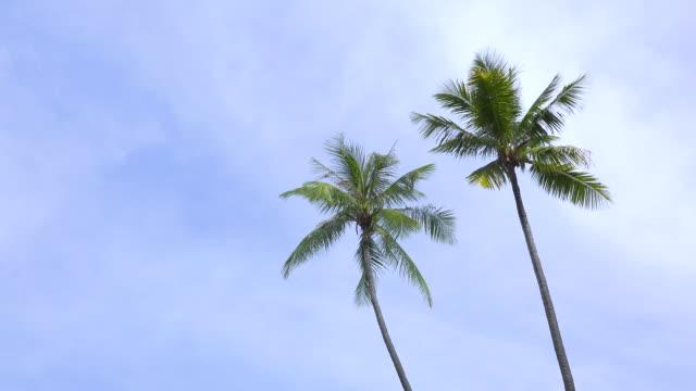 vídeos de stock e filmes b-roll de ws:palm trees and blue sky on tropical island - oscilar