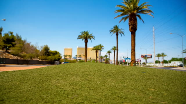 Palm Trees and Grass Las Vegas Strip Start Median video