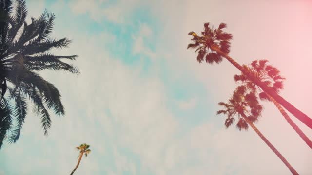 vidéos et rushes de palmiers et le soleil d'été - vue en contre plongée