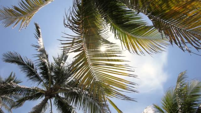 palm trees and sun in south beach miami florida usa - palm tree filmów i materiałów b-roll