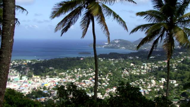 palmen und blick auf die bucht in der karibik - teurer lebensstil stock-videos und b-roll-filmmaterial