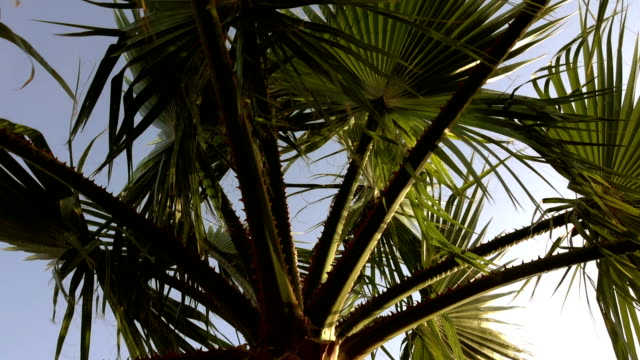 Palm trees at sunset, against the beautiful blue sky. Palm trees at sunset, against the beautiful blue sky. Tropical tree. smooth movement. pacific islands stock videos & royalty-free footage