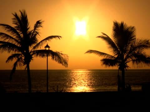 ntsc: palme al tramonto - parte della pianta video stock e b–roll