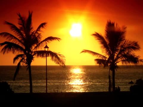 vidéos et rushes de ntsc : palmiers au coucher du soleil - angiosperme