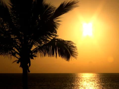 pal: palme al tramonto - parte della pianta video stock e b–roll