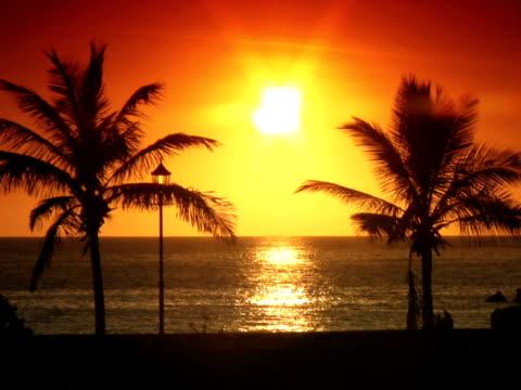 vidéos et rushes de pal : palmiers au coucher du soleil - angiosperme
