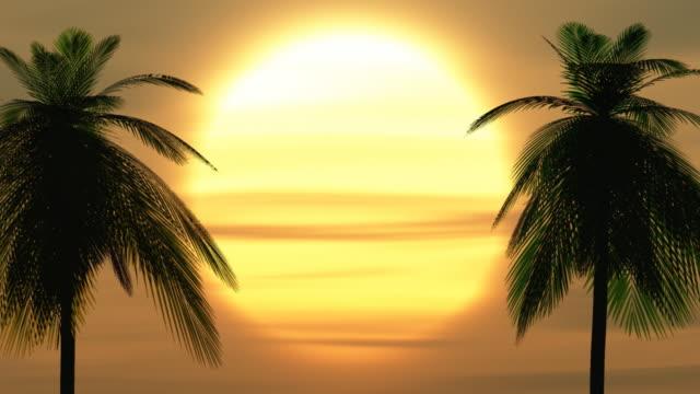 palmy o zachodzie słońca - palm tree filmów i materiałów b-roll