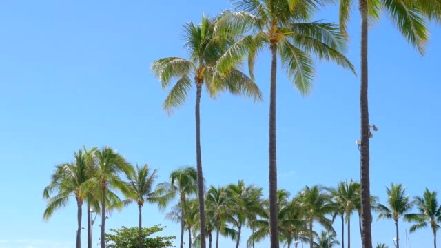 Palm trees background in 4k slow motion 60fps video