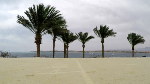 Palm Trees Beach Resort video