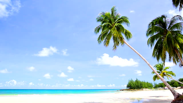 Palm trees bend on the white sand beach video