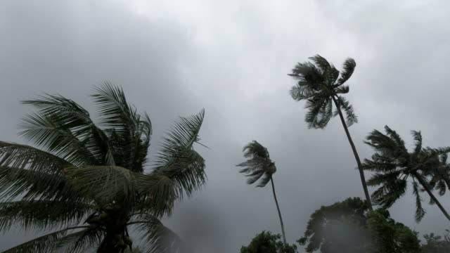 Palm trees blowing in wind tropical storm extreme weather Typhoon