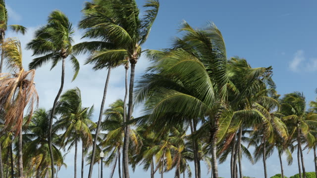 palm trees by the ocean - palm tree filmów i materiałów b-roll
