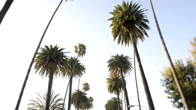 palme cascata - viale video stock e b–roll