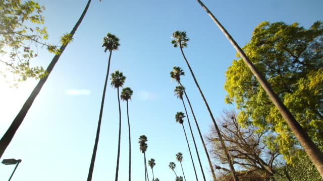 palm trees from below on clear blue sky background in beverly hills, los angeles, california - viale video stock e b–roll